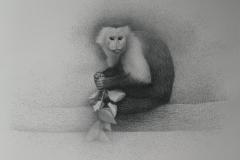 Capucijner Aapje - 2003